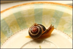 Snail on a dinner plate
